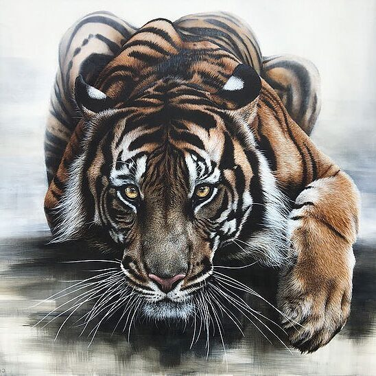 Realistic Animal Painting Tiger by Carla Grace