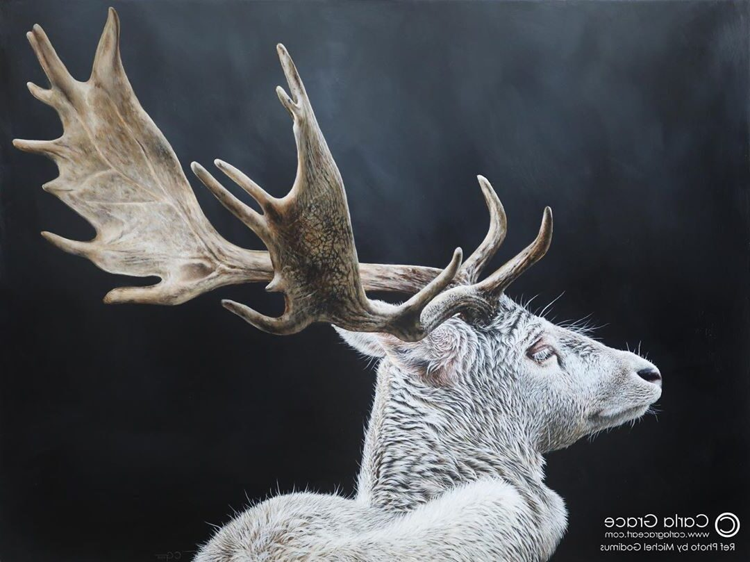 Realistic Animal Painting Reindeer by Carla Grace