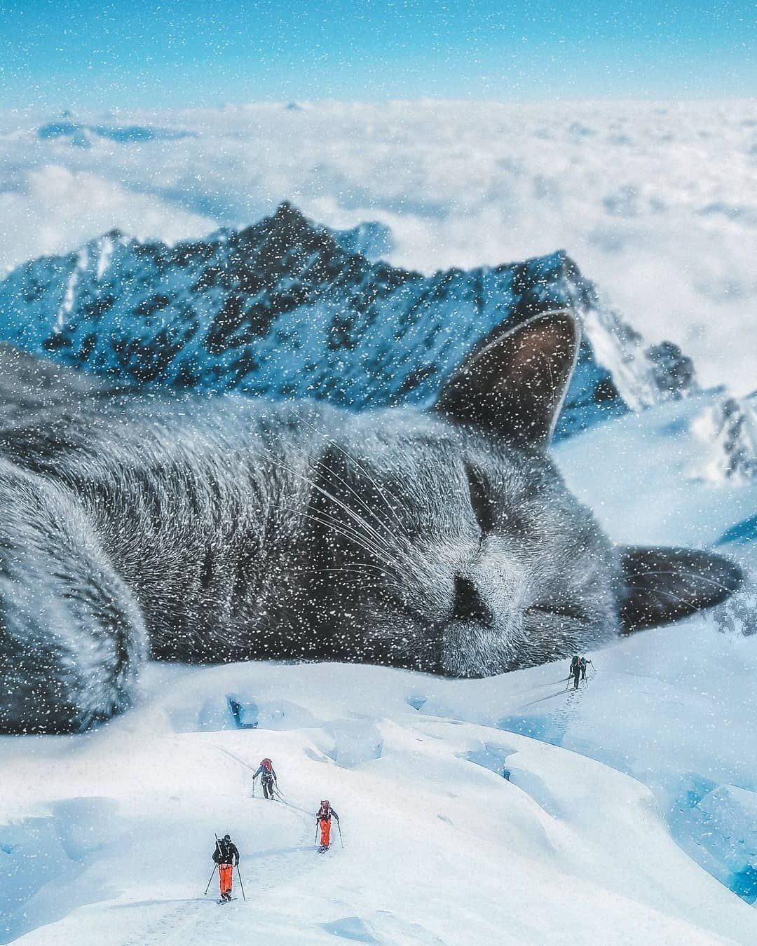 Photomanipulation Cat by Psguy2026