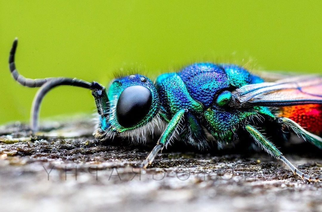 5 macro photography beetle by oliver wright