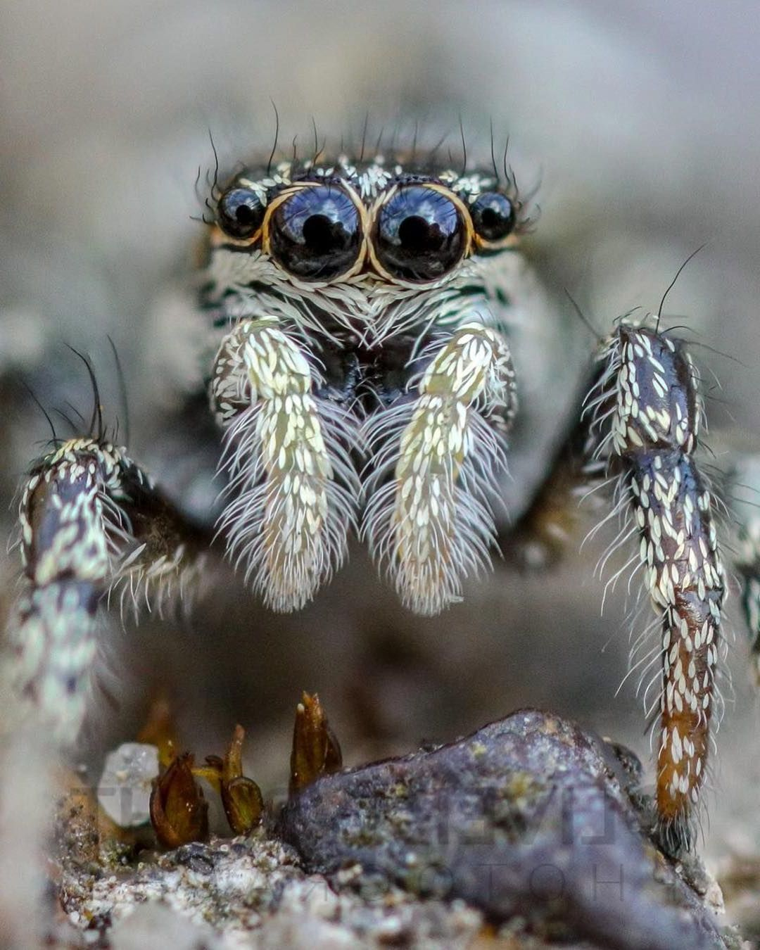 6 macro photography spider by oliver wright
