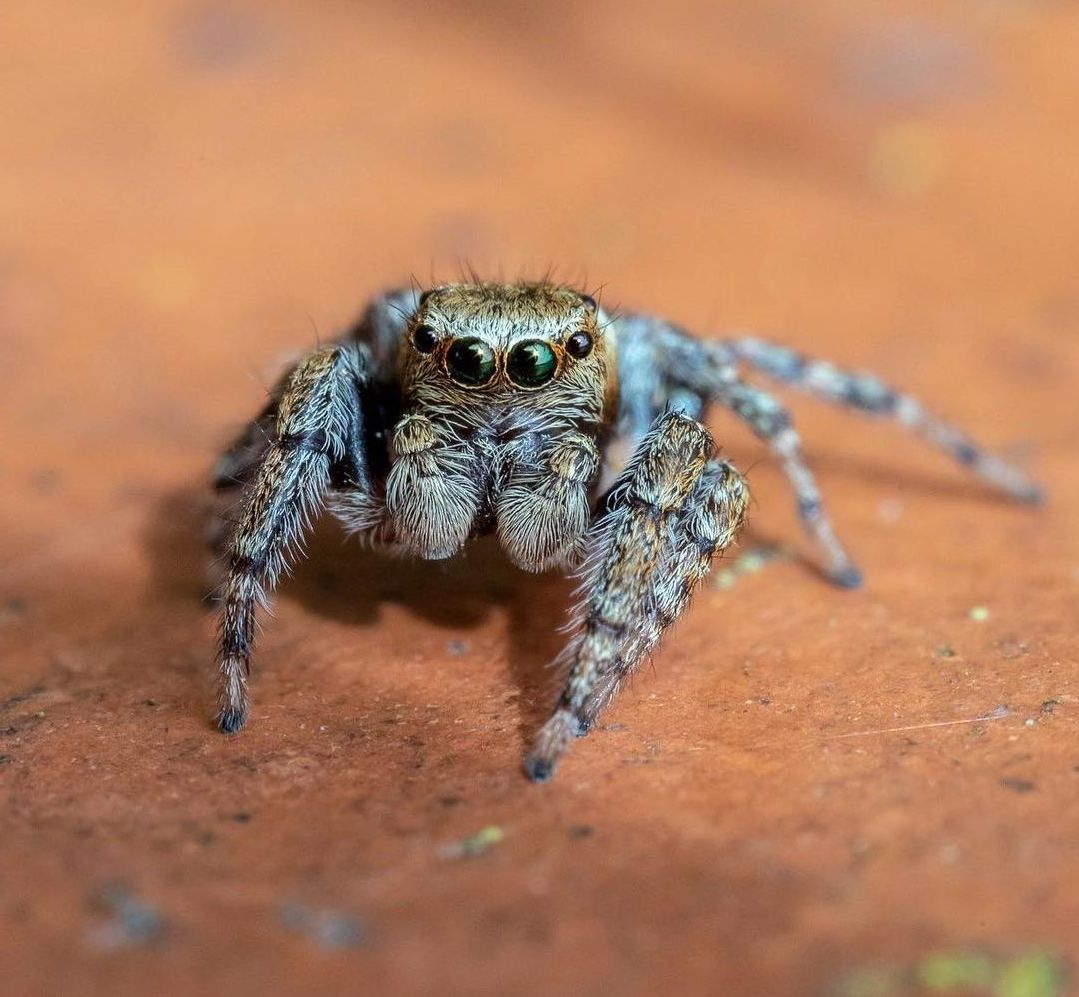 9 macro photography nine by oliver wright